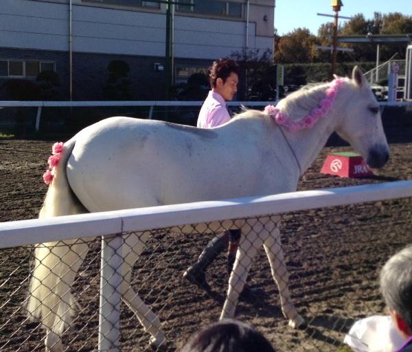 馬事公苑 馬に親しむ日