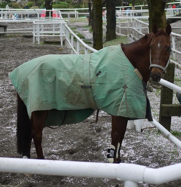 放牧場の馬