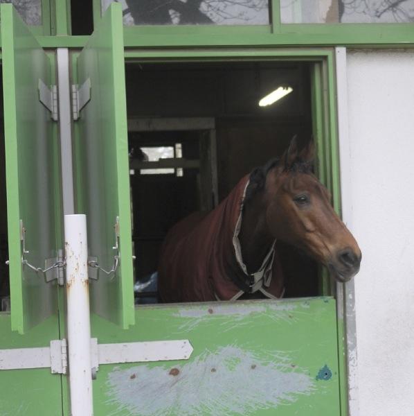 馬事公苑 馬小屋の馬