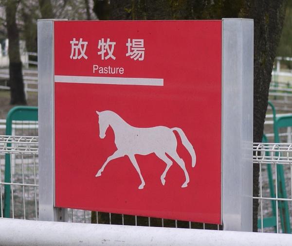 馬事公苑 放牧場