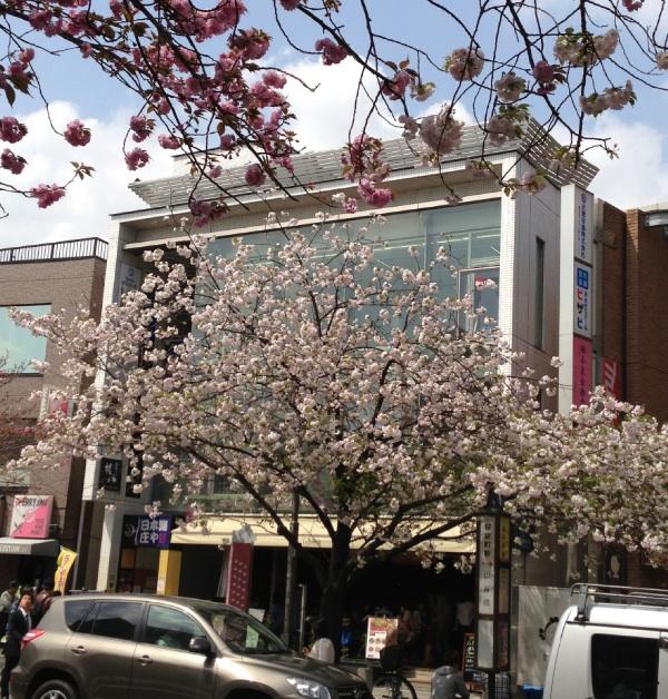 桜新町 桜