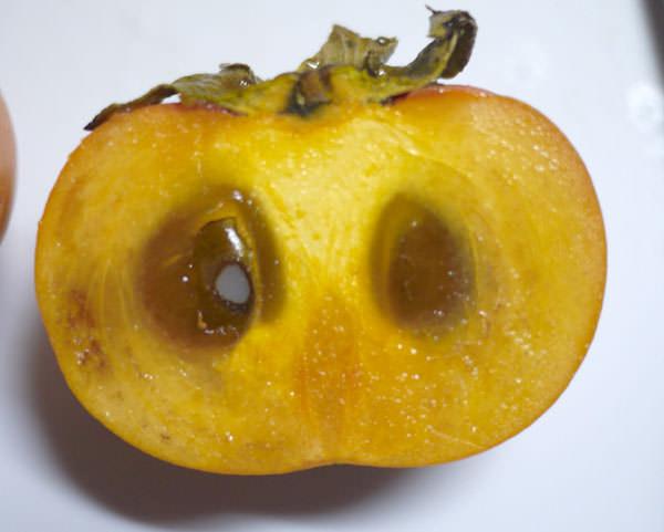 農大の柿 断面図