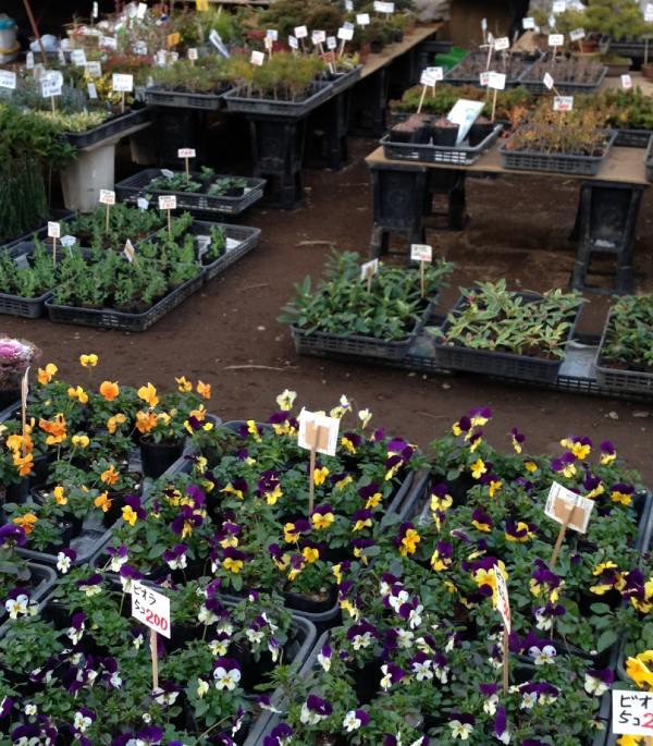 天祖神社では鉢植えの花が販売